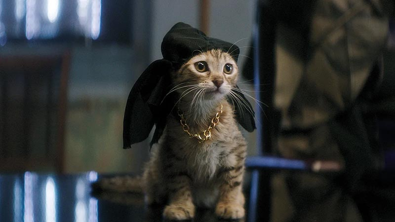 Keanu the Cat – Keanu matrix