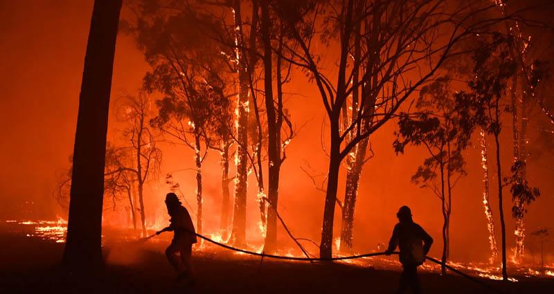 oxford yılın kelimesi iklim acil durumu