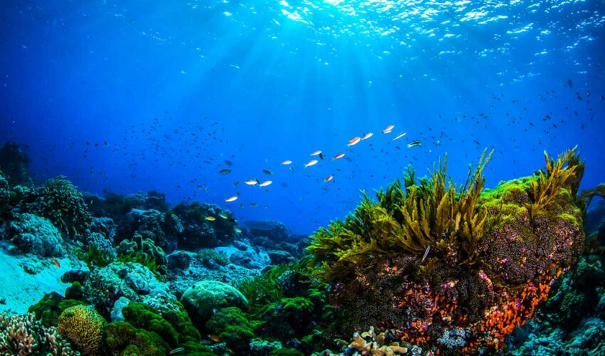 mercan resifleri nasa