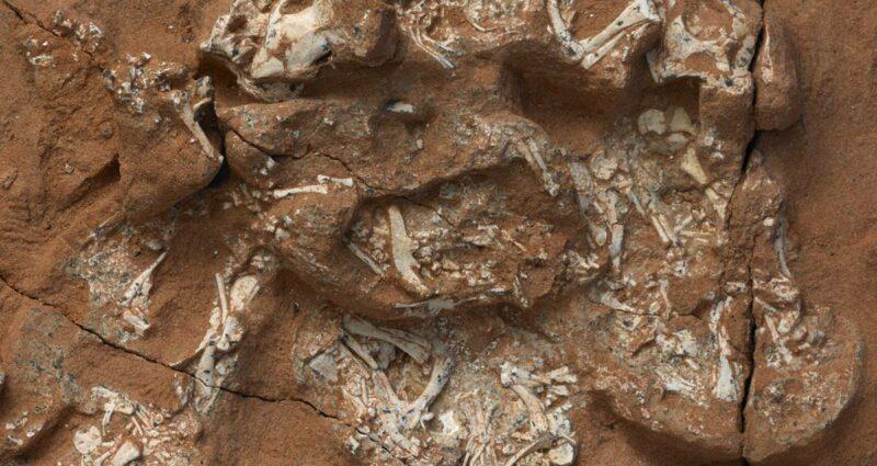 Fosil Yumurta