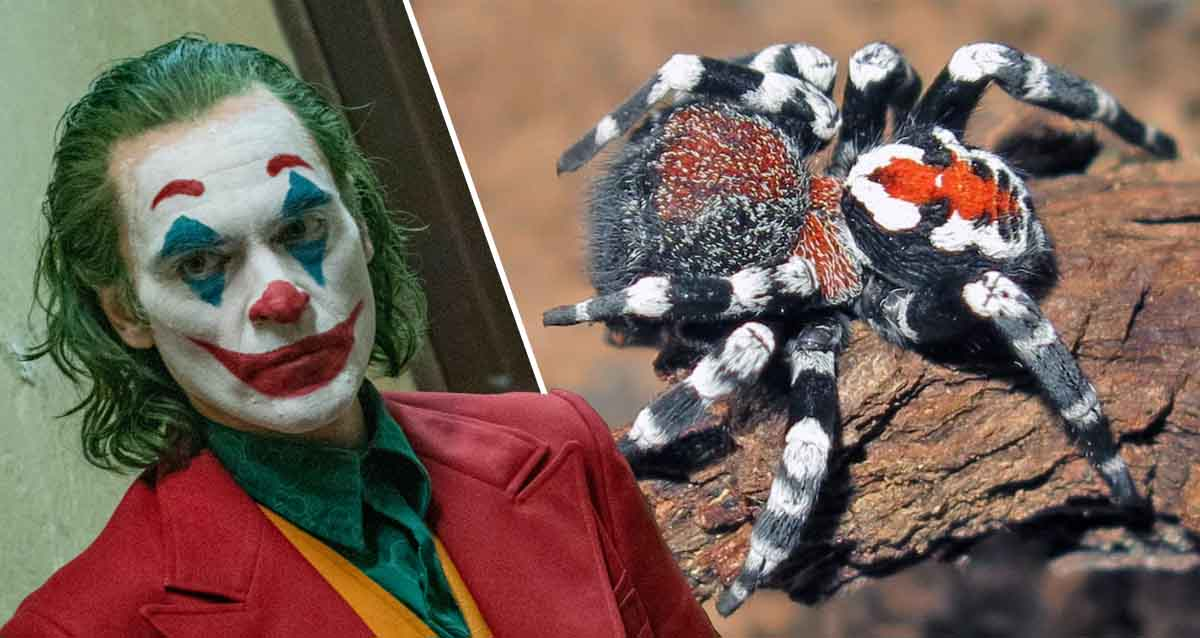 Joker Joaquin Phoenix Loureedia phoenixi
