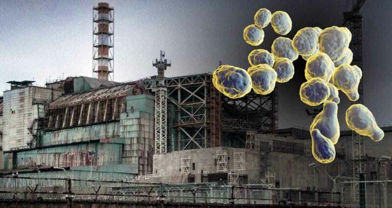 Çernobil Nükleer Santrali Mantar