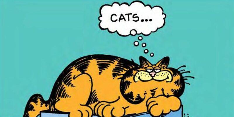 Garfield yaşlı kedi