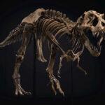 Dev T-Rex İskeleti