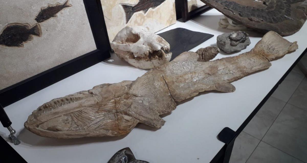 Adnan Oktar Fosil