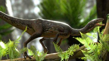 dinozor beyni
