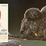Kuşların Felsefesi - Philippe J. Dubois ve Elise Rousseau