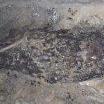 Tarihin İlk Jinekolojik Tedavisi Antik Mısır