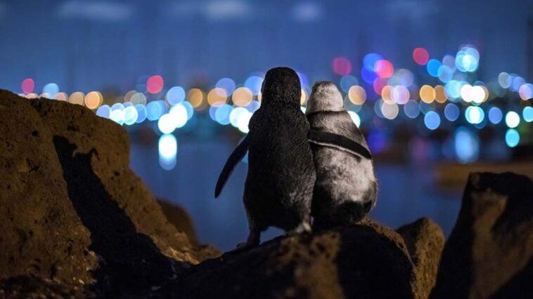 penguen yılın fotoğrafı