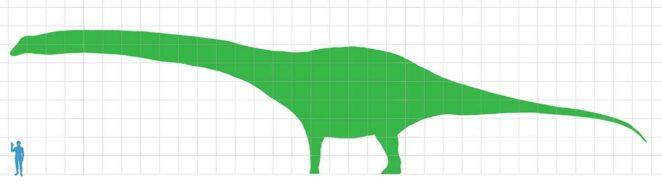 Agentinosaurus boyu