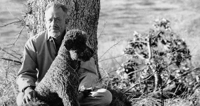 John Steinbeck Köpeği Toby