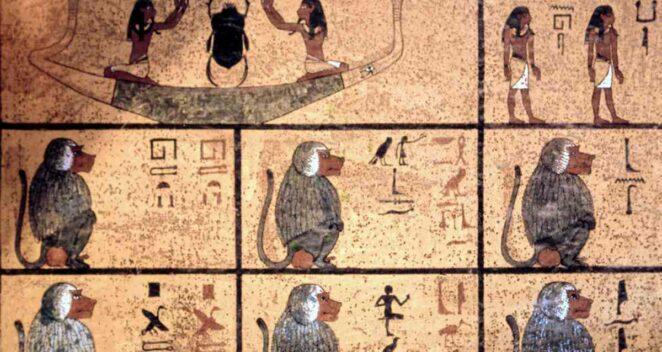 Punt Krallığı Babun Kafatası Varlık Antik Mısır