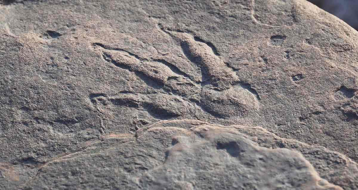 Dinozor Ayak İzi