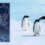 Antarktika Herkesin Kimsenin - Barkın Özdemir