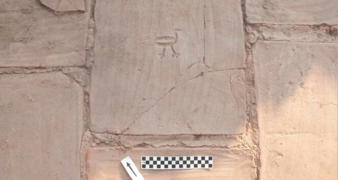 tavuk resmi manisa sardes antik kenti