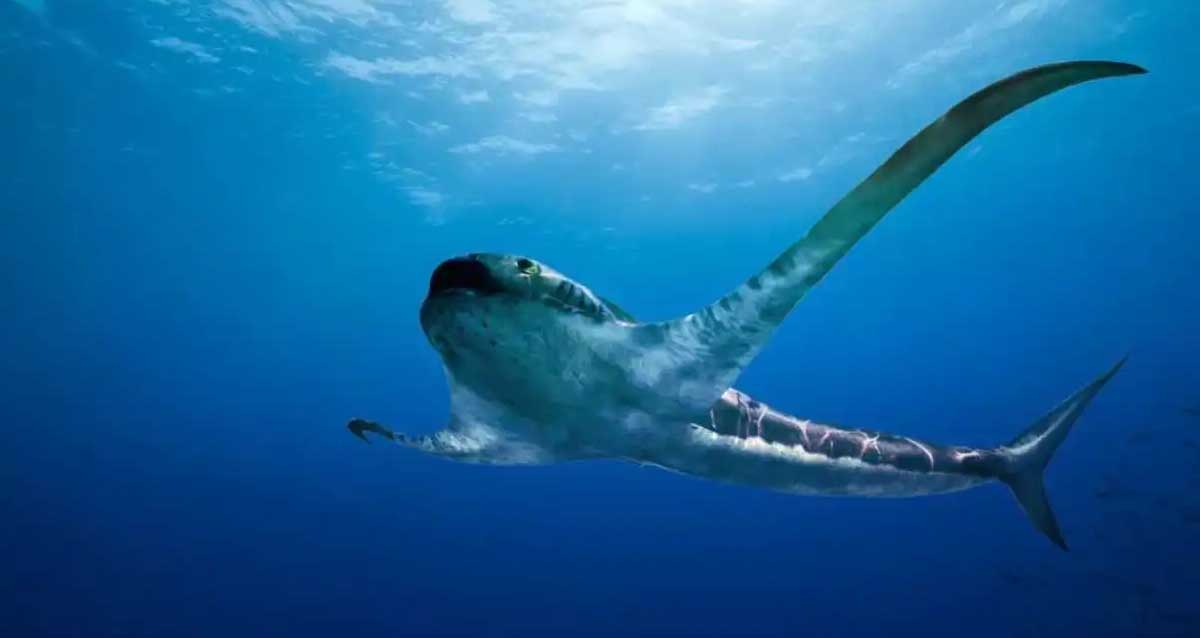 Kartal Köpek Balığı