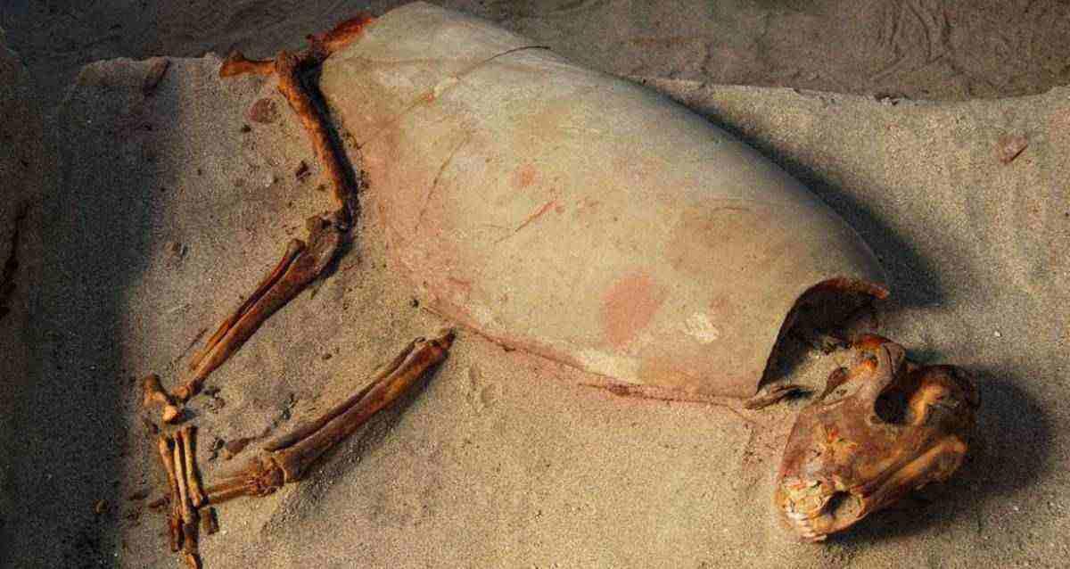 Tarihin En Eski Evcil Hayvan Mezarlığı