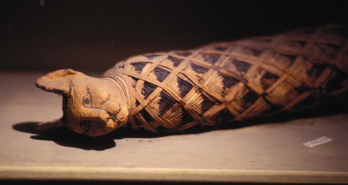 Antik Mısır Kedi Mumyaları