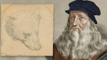 Leonardo da Vinci Head of a Bear