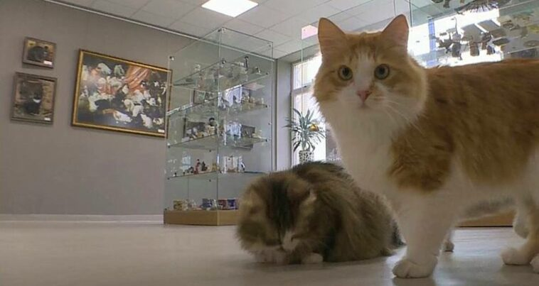 kedi müzesi eskişehir odunpazarı ilk