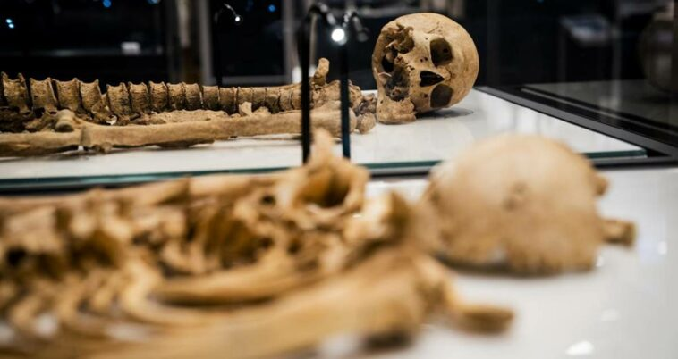 Viking iskeletleri akraba danimarka sergi