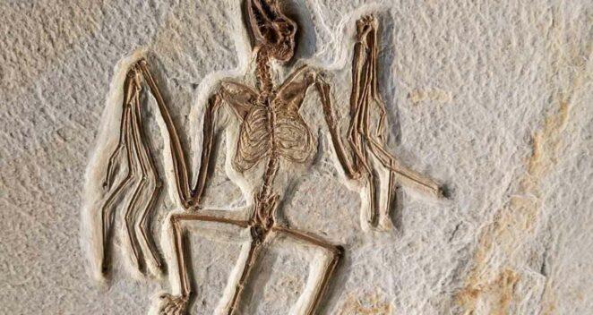 yarasalar evrim nasıl uçan memeli fosil