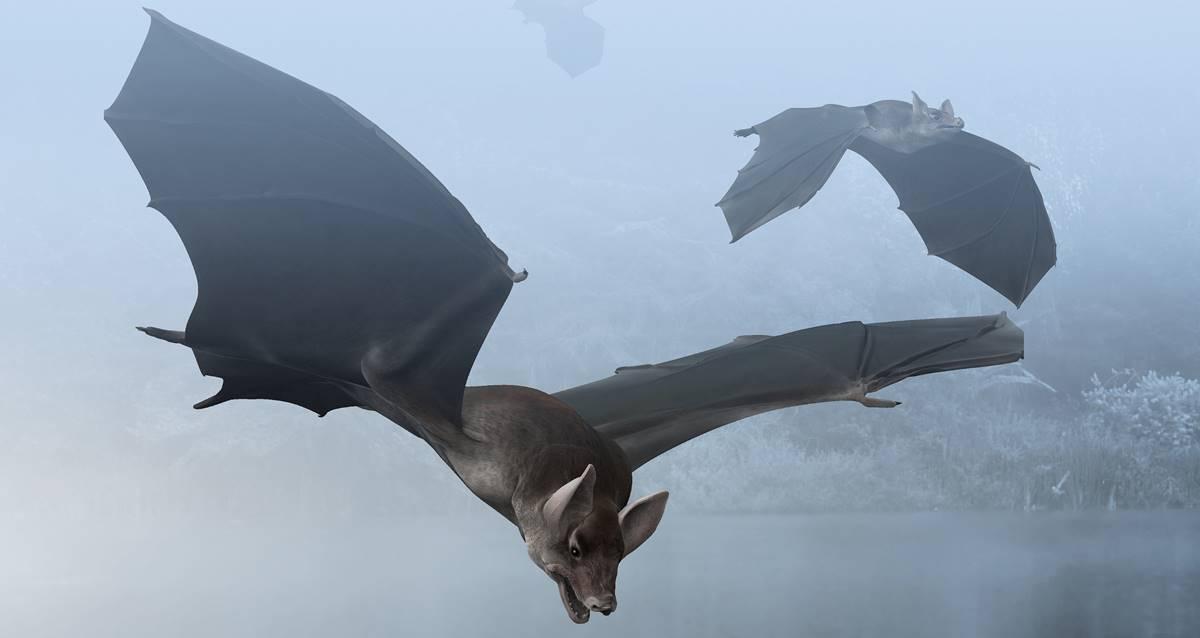 yarasalar evrim nasıl uçan memeli
