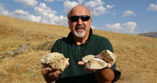 muş tropik deniz canlısı fosilleri
