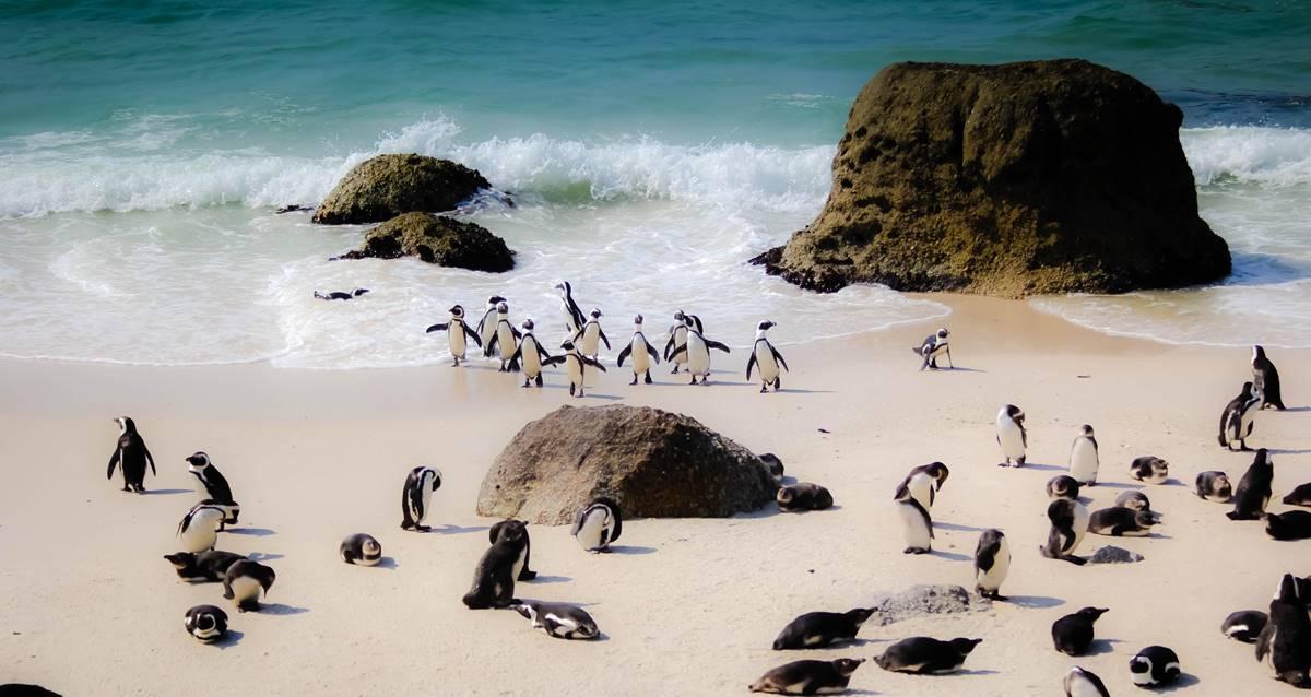 arılar penguenler güney afrika ölüm