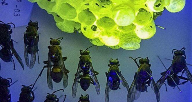 Yaban Arıları Hakkında Keşif